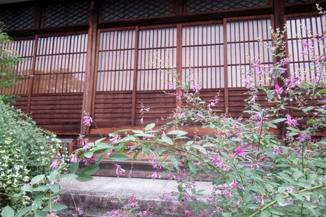 萩の寺 常林寺 盛り_e0048413_17531479.jpg