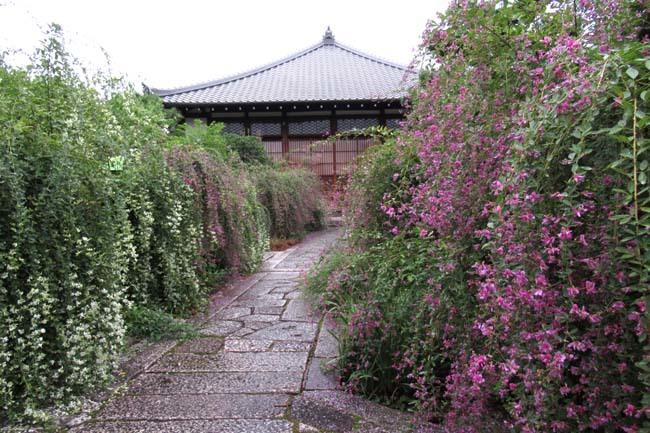 萩の寺 常林寺 盛り_e0048413_17532028.jpg