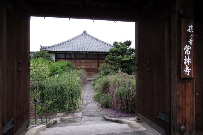 萩の寺 常林寺 盛り_e0048413_17540614.jpg