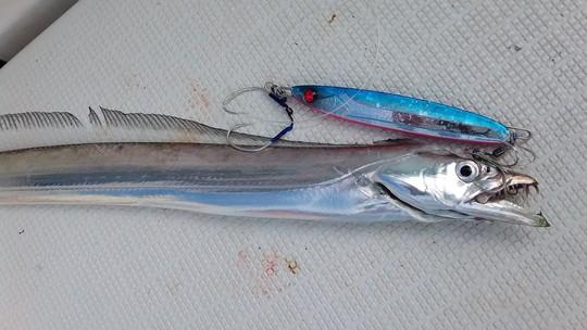鳥羽太刀魚ジギング❕❕_e0212944_10153112.jpg