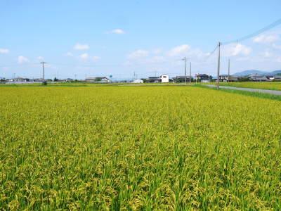 健康農園さんの無農薬栽培『雑穀米』『発芽玄米』売れてます!平成30年度の稲刈りはまもなくです!_a0254656_17484113.jpg
