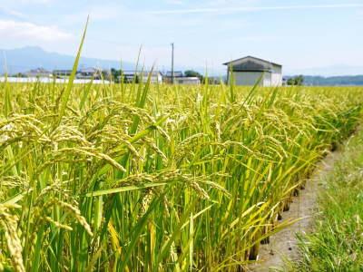 健康農園さんの無農薬栽培『雑穀米』『発芽玄米』大好評発売中!無農薬栽培のこだわりの様子!_a0254656_18220319.jpg