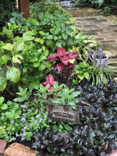 9月の庭「ヤブランと水引草など」_a0243064_16455962.jpg