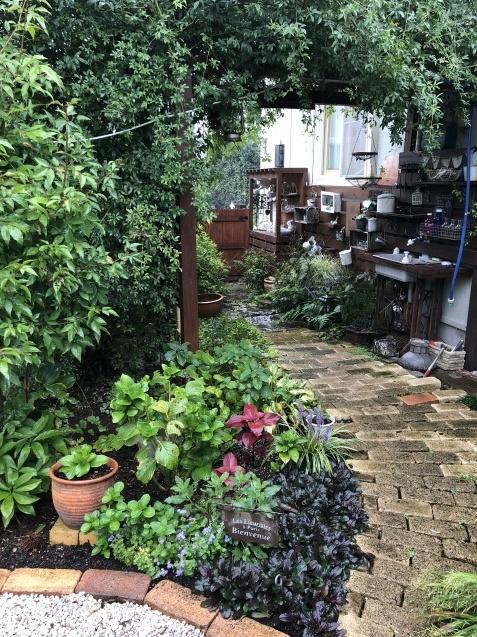 9月の庭「ヤブランと水引草など」_a0243064_16463082.jpg