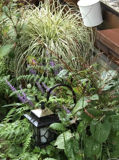 9月の庭「ヤブランと水引草など」_a0243064_16470215.jpg