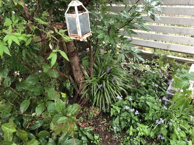 9月の庭「ヤブランと水引草など」_a0243064_16482597.jpg