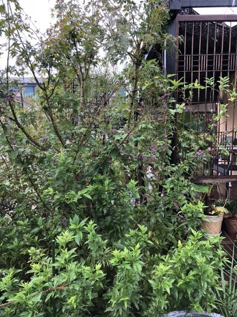 9月の庭「ヤブランと水引草など」_a0243064_16523676.jpg