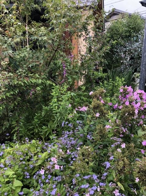 9月の庭「ヤブランと水引草など」_a0243064_16533730.jpg