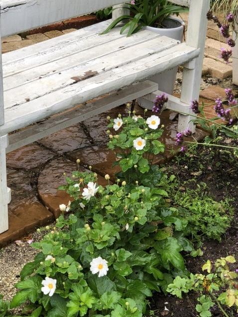 9月の庭「ヤブランと水引草など」_a0243064_16564168.jpg
