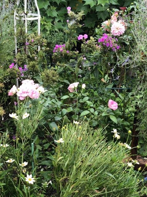 9月の庭「ヤブランと水引草など」_a0243064_16580242.jpg