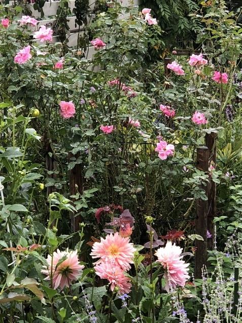9月の庭「ヤブランと水引草など」_a0243064_17001354.jpg