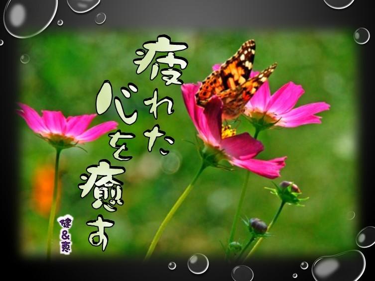 f0214467_10400386.jpg