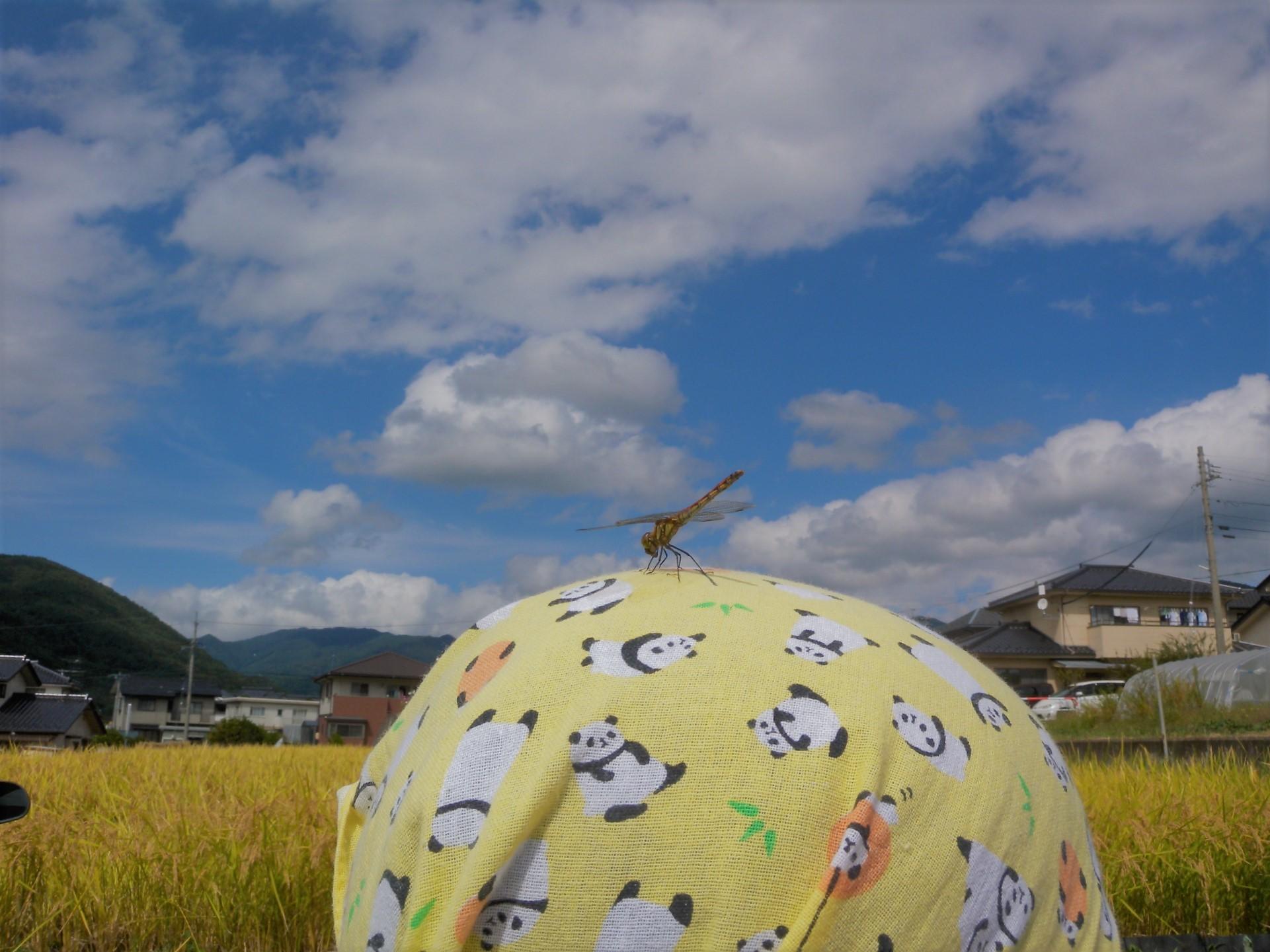秋風と 半年分の 日差し浴び_b0103093_23190186.jpg