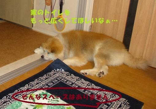 f0121712_00380367.jpg