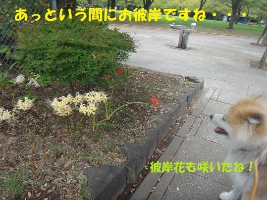 f0121712_00521371.jpg