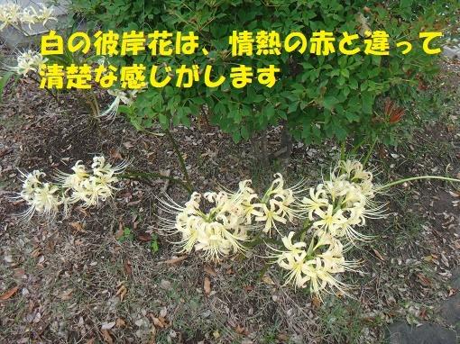 f0121712_00592081.jpg