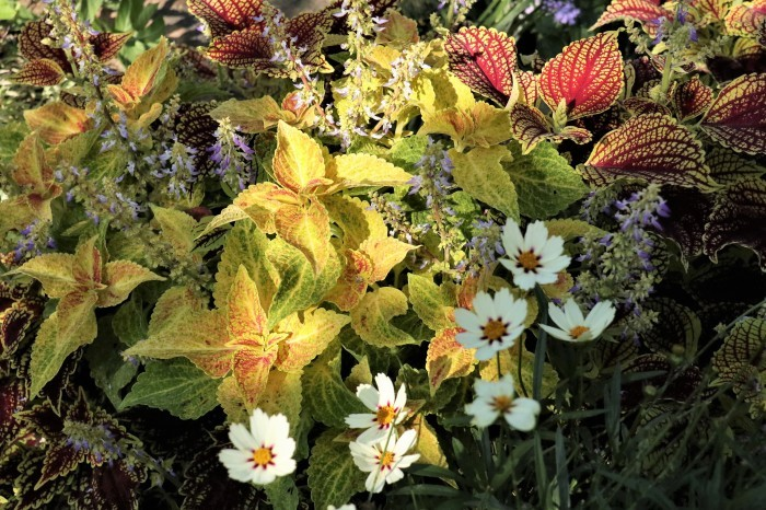 綺麗な庭を。。。ランチで楽しむ_d0150720_18014155.jpg
