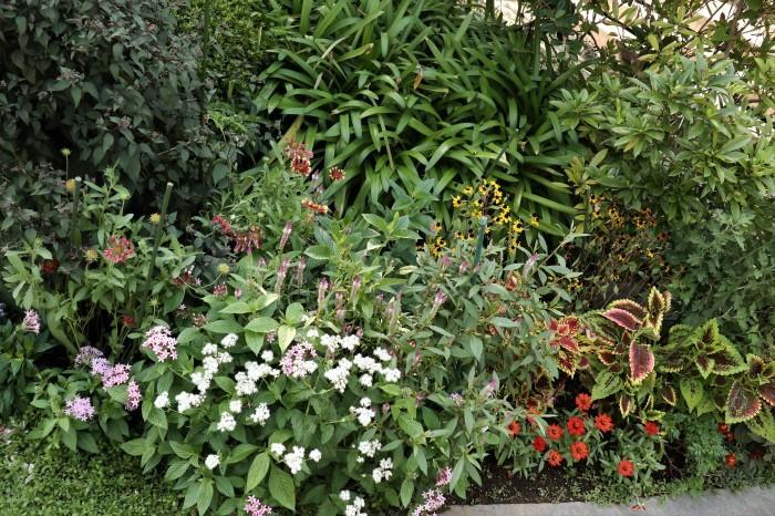 綺麗な庭を。。。ランチで楽しむ_d0150720_18021458.jpg