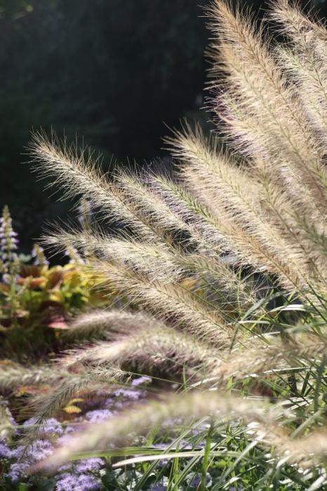 綺麗な庭を。。。ランチで楽しむ_d0150720_18024689.jpg