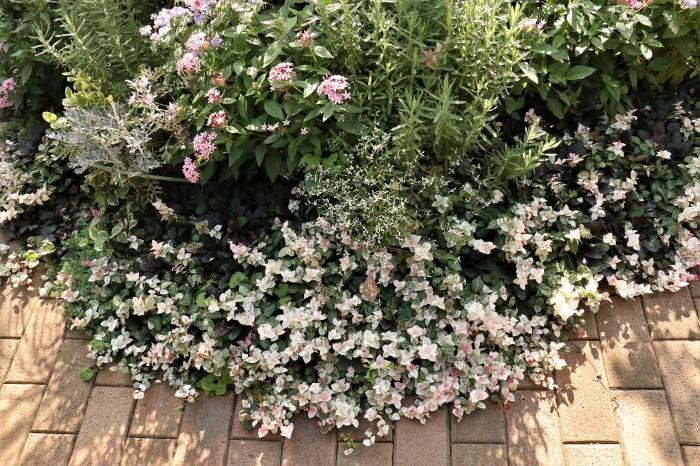 綺麗な庭を。。。ランチで楽しむ_d0150720_18030177.jpg