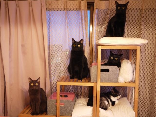 窓辺猫 らぃらぎゃぉすてぃぁらあんしゃぁりぃめりぃぽぴんず編。_a0143140_19273886.jpg