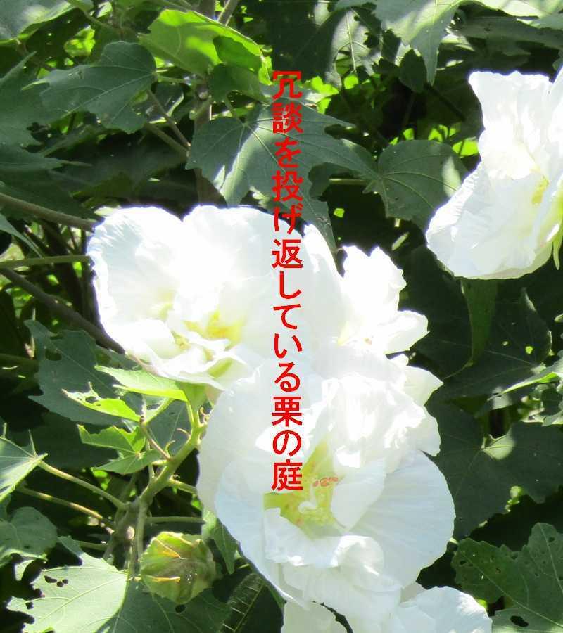 f0117041_05180821.jpg