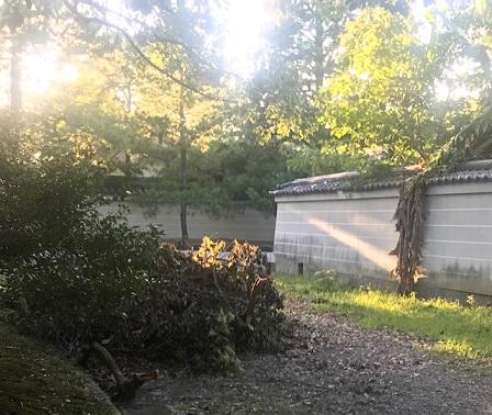 御所の神様へ10周年のお礼に・台風の被害・猫・彼岸花_f0181251_14434293.jpg