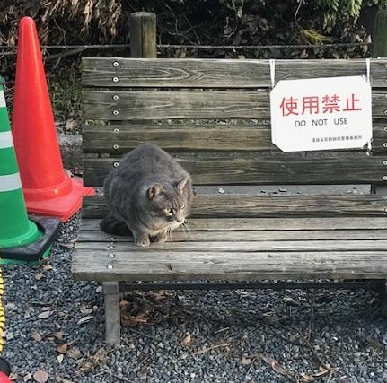 御所の神様へ10周年のお礼に・台風の被害・猫・彼岸花_f0181251_14511760.jpg