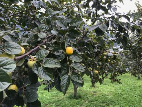 【秋の収穫のお知らせ】_a0263653_14562892.jpg