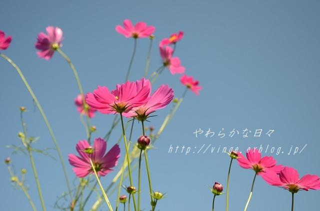 September rain_a0158478_09584957.jpg