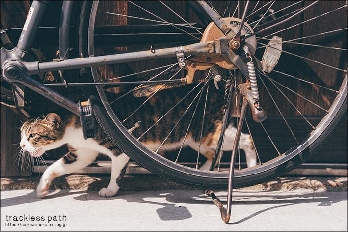 道なき道は猫の道_f0100215_22550119.jpg