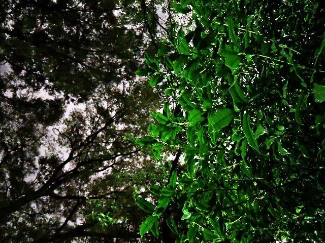 秋の匂い_c0062832_16305038.jpg
