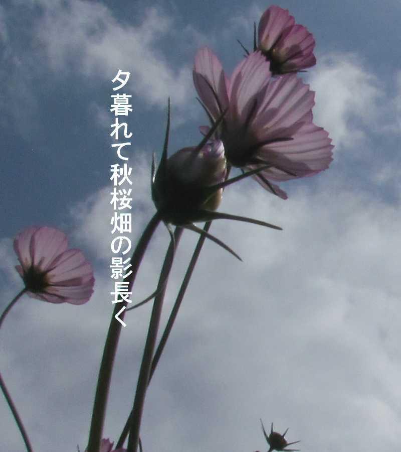 f0117041_16051727.jpg