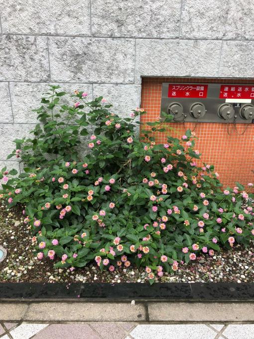 Tokyo生活です_b0093660_17461561.jpg