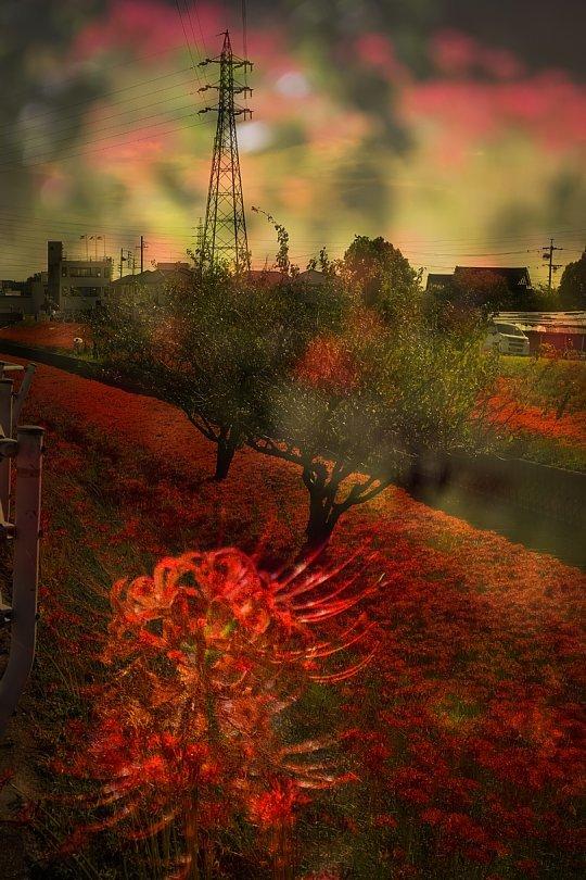 Blazing River Bank On Autumnal Equinox Day_d0353489_18553707.jpg
