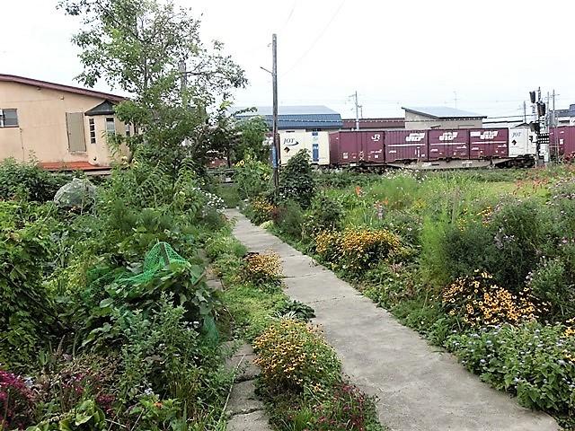 藤田八束の鉄道写真@青森で見つけた花園と貨物列車絶好のコラボトライアングル地帯・・・トライアングル地帯の鉄道写真_d0181492_21452194.jpg
