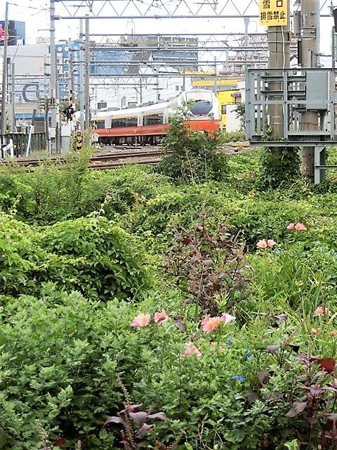 藤田八束の鉄道写真@青森で見つけた花園と貨物列車絶好のコラボトライアングル地帯・・・トライアングル地帯の鉄道写真_d0181492_21573197.jpg