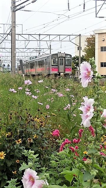 藤田八束の鉄道写真@青森で見つけた花園と貨物列車絶好のコラボトライアングル地帯・・・トライアングル地帯の鉄道写真_d0181492_21574933.jpg