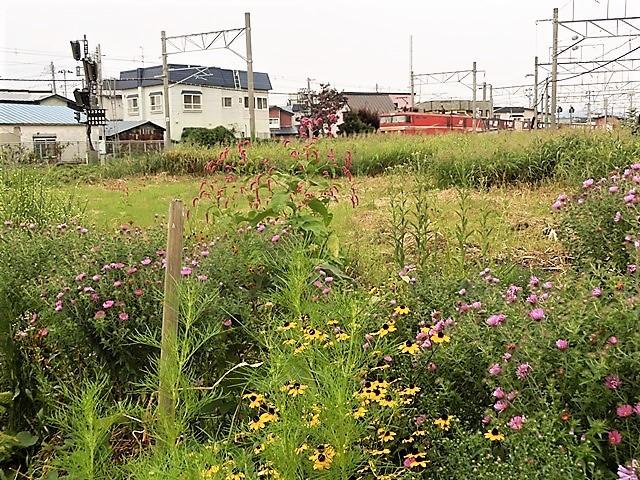 藤田八束の鉄道写真@貨物列車、リゾート列車のを激写、美しい日本そして鉄道写真を追っかける・・・青森トライアングル_d0181492_21591367.jpg