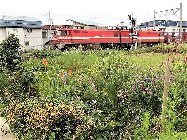 藤田八束の鉄道写真@東北本線の楽しい列車達、奥羽本線のリゾート列車・・・青い森鉄道の貨物列車、モーリー君_d0181492_22002797.jpg