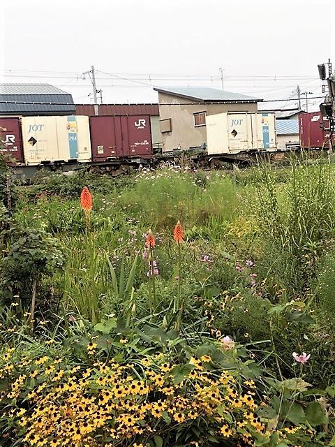 藤田八束の鉄道写真@貨物列車、リゾート列車のを激写、美しい日本そして鉄道写真を追っかける・・・青森トライアングル_d0181492_22005483.jpg