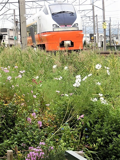 藤田八束の鉄道写真@貨物列車、リゾート列車のを激写、美しい日本そして鉄道写真を追っかける・・・青森トライアングル_d0181492_22014265.jpg