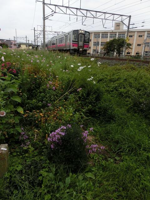 藤田八束の鉄道写真@貨物列車、リゾート列車のを激写、美しい日本そして鉄道写真を追っかける・・・青森トライアングル_d0181492_22042669.jpg