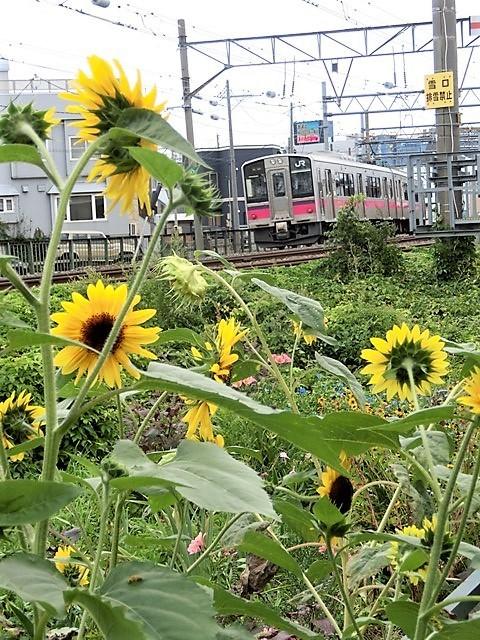 藤田八束の鉄道写真@貨物列車、リゾート列車のを激写、美しい日本そして鉄道写真を追っかける・・・青森トライアングル_d0181492_22053975.jpg