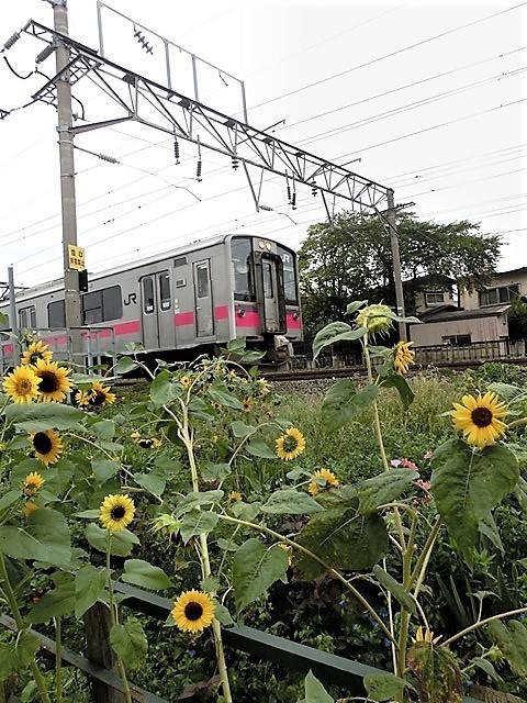 藤田八束の鉄道写真@貨物列車、リゾート列車のを激写、美しい日本そして鉄道写真を追っかける・・・青森トライアングル_d0181492_22055147.jpg