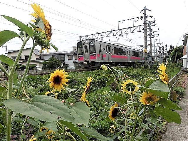 藤田八束の鉄道写真@貨物列車、リゾート列車のを激写、美しい日本そして鉄道写真を追っかける・・・青森トライアングル_d0181492_22060673.jpg