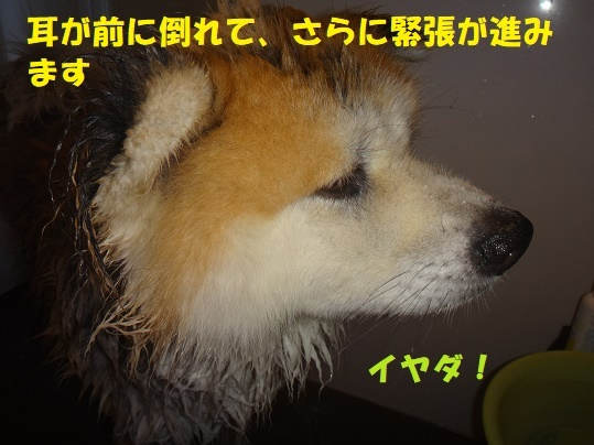 f0121712_23314008.jpg