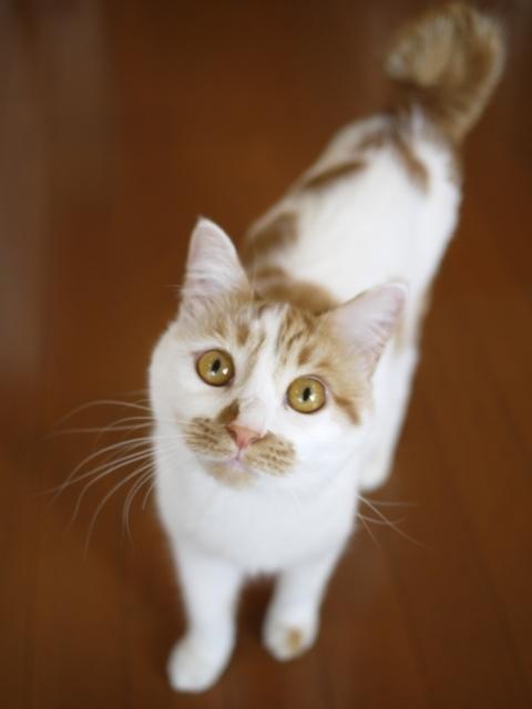 猫のお留守番 むぎちゃん編。_a0143140_22194283.jpg