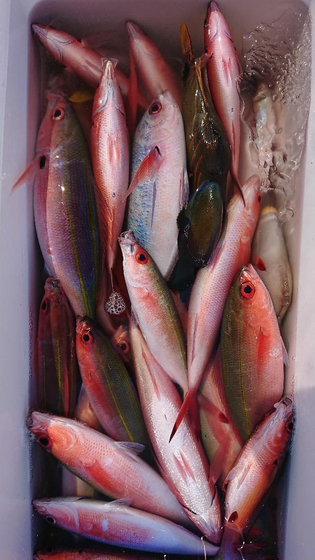 グルクン釣り年に数回..._b0000363_20154381.jpg