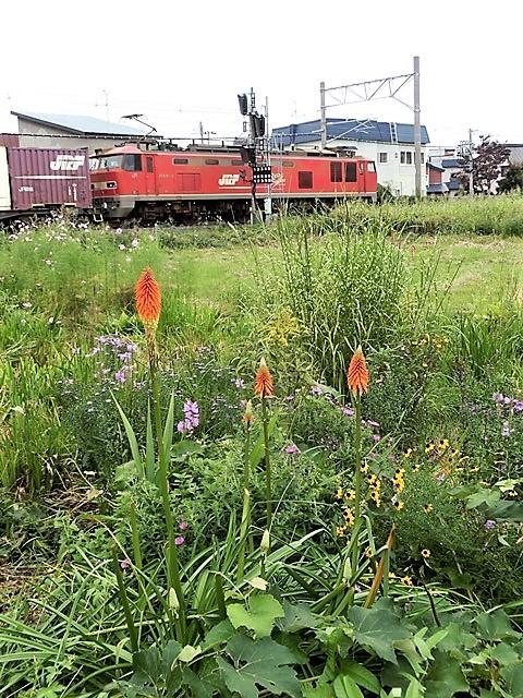 藤田八束の鉄道と旅@日本の四季を堪能、四季と健康について考える・・・人間はなぜこの世にいるのか、自分の存在価値_d0181492_21020350.jpg